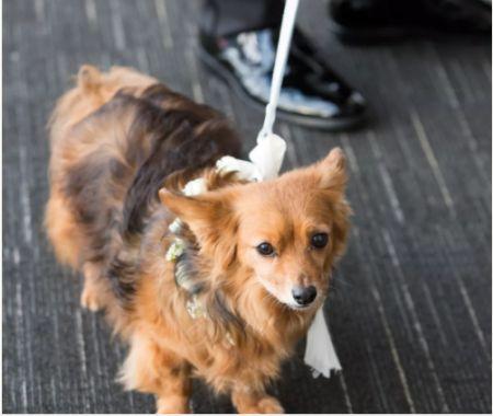 Iliza Shlesinger dog served as the ring bearer.